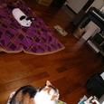三匹の猫たち