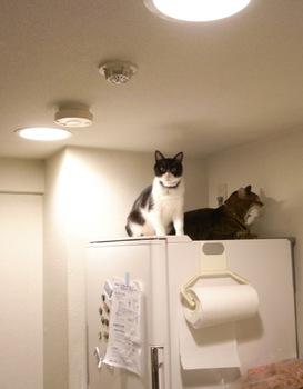 冷蔵庫の上