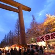 靖国神社の花見